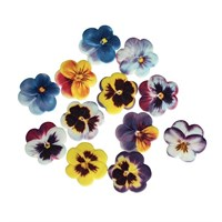 SugarSoft® Pansies - 30mm - Boxed 60